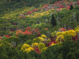 Fall Color in and around the Mountains in Utah. Photographic Print by Patrick Brooks Brandenburg