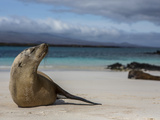 Galapagos Islands, Ecuador Photographic Print by Karine Aigner