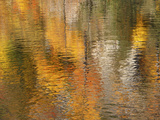 Reflections Photographic Print by Aaron Reed