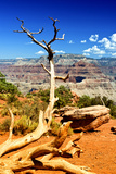 Cedar Ridge - Grand Canyon - National Park - Arizona - United States Photographic Print by Philippe Hugonnard