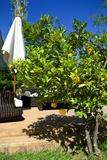 Orangenbaum, Marrakesch Fotodruck von Philippe Hugonnard