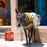 Hest i berber-landsby nær Marrakech, Marokko Fotografisk tryk af Philippe Hugonnard