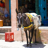 Cavallo in un villaggio berbero vicino a Marrakech, Marocco Stampa fotografica di Philippe Hugonnard