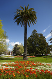 Palm Tree, Gardens, Seymour Square, Blenheim, Marlborough, South Island, New Zealand Photographic Print by David Wall