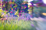 Rose Garden Using Selective Focus, Victoria, British Columbia, Canada Photographic Print by Terry Eggers
