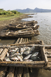 Fishing on Lake Chamo in Raft Made of Isoke Wood, Arba Minch, Ethiopia, Africa Photographic Print by Martin Zwick