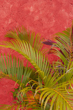 Palm Tree Against Colorful Stucco Wall, Cozumel, Mexico Photographic Print by Lisa S. Engelbrecht