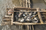 Fishing on Lake Chamo in Raft Made of Isoke Wood, Arba Minch, Ethiopia, Africa Photographic Print by Martin Zwick