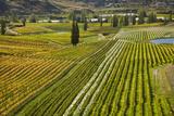 Felton Road Vineyard, Autumn, Bannockburn, Central Otago, South Island, New Zealand Photographic Print by David Wall