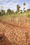 Dry Farming on Terraces, Konso, Rift Valley, Ethiopia, Africa Photographic Print by Martin Zwick