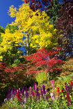 Autumn Color, Butchard Gardens, Victoria, British Columbia, Canada Photographic Print by Terry Eggers