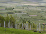 Apple Orchards, Farmland in Vinschgau, South Tyrol, Italy Photographic Print by Martin Zwick