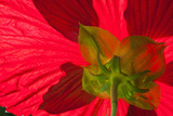 Red Flower, Autumn Color, Butchard Gardens, Victoria, British Columbia, Canada Photographic Print by Terry Eggers