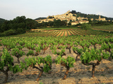 View of Provence Vineyard, Luberon, Bonnieux, Vaucluse, France Photographic Print by David Barnes