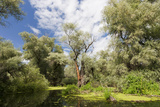 Willows, Alder, Ash Trees from Riparian Forest in Channels, Danube Delta, Romania Photographic Print by Martin Zwick