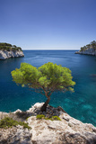 Lone Pine Tree Growing Out of Solid Rock, Calanques Near Cassis, Provence, France Fotografie-Druck von Brian Jannsen