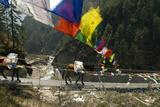Mule Train on Trail to Namche Bazaar, Larja Bridge, Khumbu, Nepal Photographic Print by David Noyes