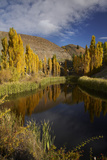 Poplar Trees in Autumn, Bannockburn, Cromwell, Central Otago, South Island, New Zealand Photographic Print by David Wall
