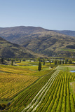 Felton Road Vineyard, Autumn, Bannockburn, Central Otago, South Island, New Zealand Photographic Print by David Wall