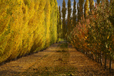 Orchard in Autumn, Ripponvale, Cromwell, Central Otago, South Island, New Zealand Photographic Print by David Wall