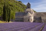 Rows of Lavender, Abbaye De Senanque, Gordes, Luberon, Provence, France Fotodruck von Brian Jannsen