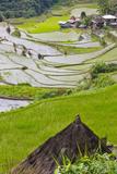 Straw Hut and Rice Terraces, Philippine Cordilleras, Banaue, Philippines Photographic Print by Keren Su