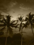 View Palm Trees on Beach, Big Islands, Kona, Hawaii, USA Reproduction photographique par Stuart Westmorland