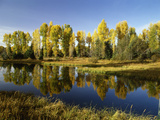 Coniferous Tree Reflected in Beaver Pond, Grand Teton National Park, Wyoming, USA Photographic Print by Stuart Westmorland
