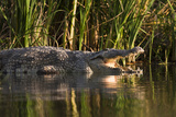 Nile Crocodile on the Shore, Crocodile Market, Lake Chamo, Ethiopia Photographic Print by Martin Zwick