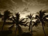 View Palm Trees on Beach, Big Islands, Kona, Hawaii, USA Papier Photo par Stuart Westmorland