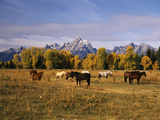 Horses on Moran Junction at Grand Teton National Park, Wyoming, USA Photographic Print by Stuart Westmorland
