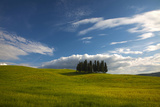 Tuscan Hill Side Cypress Tree Grouping, Italy Photographic Print by Terry Eggers