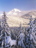 Winter Frost Trees on Mt. Hood, Mt Hood National Forest, Oregon, USA Photographic Print by Stuart Westmorland