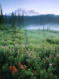 Meadow Flowers, Mt Rainier National Park, Washington, USA Fotodruck von Stuart Westmorland