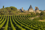 Dawn in a Vineyard Overlooking La Cite Carcassonne, Languedoc-Roussillon, France Photographic Print by Brian Jannsen
