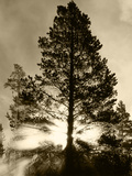View of Sunbeam Through Trees, Yellowstone National Park, Wyoming, USA Photographic Print by Scott T. Smith