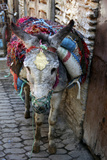 Donkey of the Souks Markets, Fes, Morocco, Africa Photographic Print by Kymri Wilt