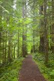 Curly Creek Falls, Lewis River, Gifford Pinchot National Forest, Washington, USA 写真プリント : ジェイミー&ジュディ・ワイルド