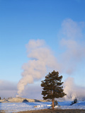 Old Faithful Geyser, Lodgepole Pine, Yellowstone National Park, Wyoming, USA Photographic Print by Scott T. Smith