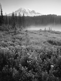 Meadow Flowers, Mt Rainier National Park, Washington, USA Photographic Print by Stuart Westmorland
