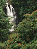 Nanue Falls, Alexandra Palms and African Tulip Trees, Hawaii, USA Photographic Print by Stuart Westmorland