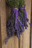 Bunches of Lavender Drying Shed at Lavender Festival, Sequim, Washington, USA Photographic Print by John & Lisa Merrill