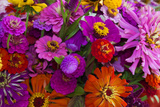 Bouquet of Colorful at a Farmers' Market, Savannah, Georgia, USA Photographic Print by Joanne Wells