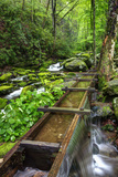 Tub Mill Flume, Great Smoky Mountains National Park, Tennessee, USA Photographic Print