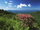 Catawba Rhododendrons, Blue Ridge Parkway, Pisgah National Forest, North Carolina, USA Photographic Print by Adam Jones