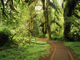 View of Clubmoss, Hoh Rainforest, Olympic National Park, Washington State, USA Photographic Print by Stuart Westmorland