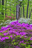 Winterthur Gardens, Delaware, USA Photographic Print