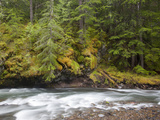 Lewis River, Gifford Pinchot National Forest, Washington, USA Photographic Print by Jamie & Judy Wild