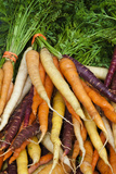Fresh Carrots at a Farmers' Market, Savannah, Georgia, USA Photographic Print by Joanne Wells