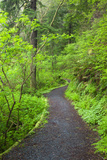 Oregon Coast Trail, Oswald West State Park, Oregon, USA Photographic Print by Jamie & Judy Wild
